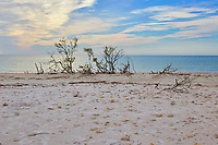 Winter scene at Honeymoon Island State Park near Clearwater, Florida