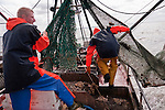 Peter jumps over a small haul dumped on the deck as father and son prepare to winch the now empty net out of the way.