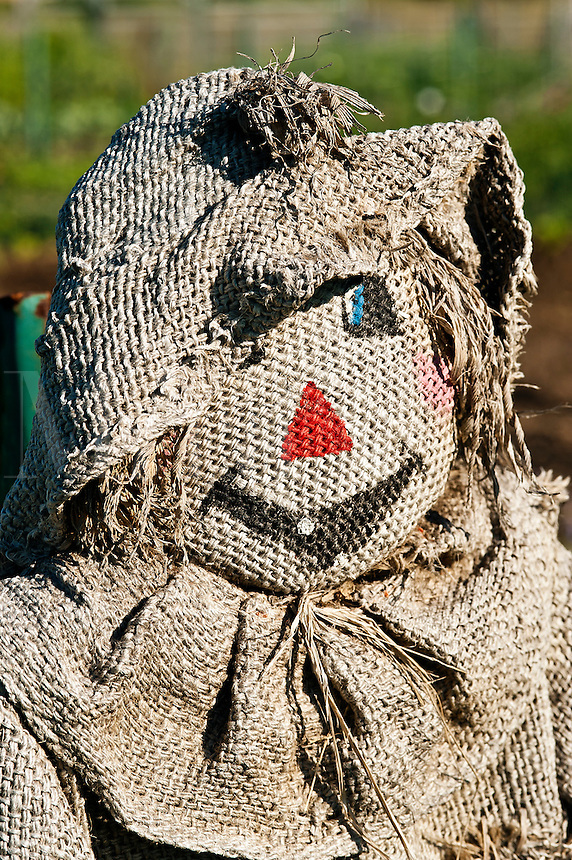 Scarecrow in garden.