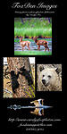 Yellowstone Photo Workshop & Day Trips