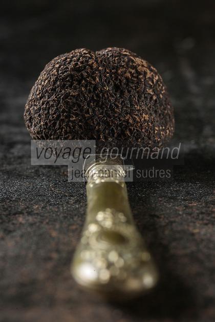 46 Europe, France, Midi-Pyrénées (46) Lot : Truffe du Périgord,truffe noire, ou Tuber Melanosporum, chez Pierre-Jean Pebeyre Trufficulteur à Cahors - Stylisme : Valérie LHOMME // Perigord truffle, black truffle, Tuber melanosporum , in Pierre-Jean Pebeyre house in Cahors ,  Lot - Styling: Valerie LHOMME
