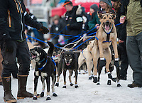 Four-time champion Martin Buser's team is impatient to begin their run at the ceremonial start of the 43rd Iditarod dog sled race in downtown Anchorage. 79 mushers made their way 11 miles through the slushy streets of Anchorage in unseasonably warm weather and early rain. This year's official re-start will begin in Fairbanks because of poor trail conditions in Southcentral Alaska.