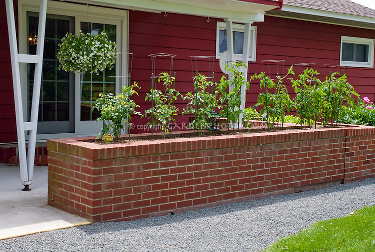 Tomatoes in raised garden bed made of brick useful for handicapped