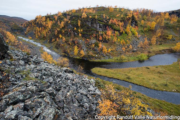 Høstfarger i Stabbursdalen nasjonalpark.