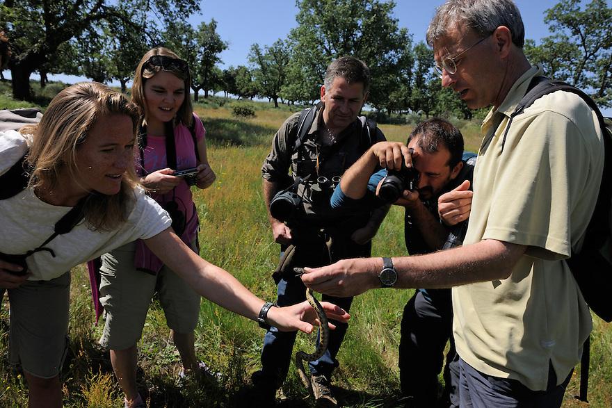 Visitors group checks out a Natrix maura snake<br /> Campanarios de Az&aacute;ba reserve<br /> Salamanca district, Castilla y Le&oacute;n, Spain