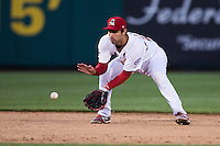 Jake Lemmerman #23 of the Springfield Cardinals fields a ground ball during a game against the Tulsa Drillers at Hammons Field on May 4, 2013 in Springfield, Missouri. (David Welker/Four Seam Images)