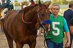 HALLANDALE BEACH, FL  JANUARY 27: Collected heads to the saddling paddock before the running of the Pegasus World Cup Invitational, at Gulfstream Park Race Track on January 27, 2018,  in Hallandale Beach, Florida. (Photo by Casey Phillips/ Eclipse Sportswire/ Getty Images)