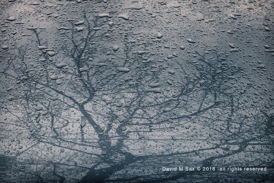 3.26.17 - Raining Tree...