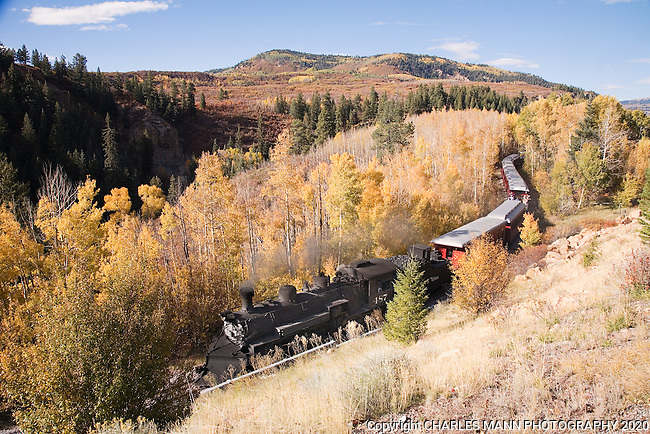 The Cumbres & Toltec steam railroad slides through an aspen grove as it returns from a autumn day's run near Chama, New Mexico