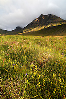 Meadow below mountains, East Iceland, Iceland