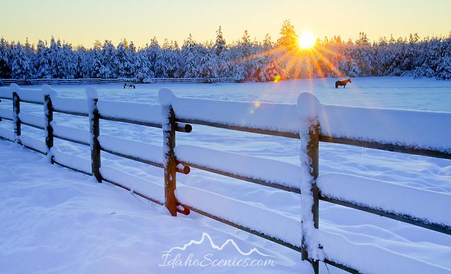 Idaho, North, Athol. Horses in a snow covered pasture at sunrise.