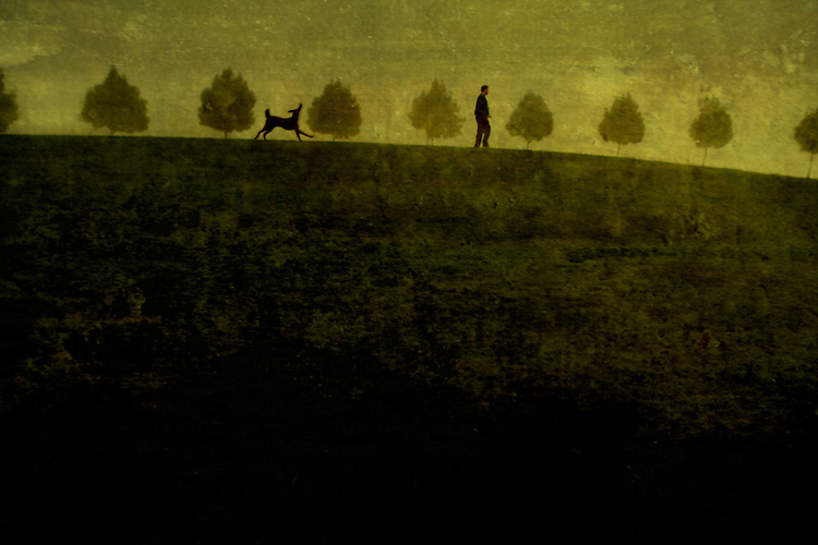 A man walking a large dog past a row of small trees