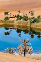Date palms reflected in the still waters of the Uhm al Maa lake in the Ubari Desert