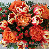 Gisela, FLOWERS, BLUMEN, FLORES, photos+++++,DTGK2137,#f#