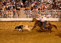 Wranglers at a rodeo roping calves.