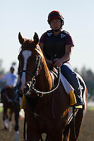 Dullahan coming off the track for trainer Dale Romans at Santa Anita Park in Arcadia California