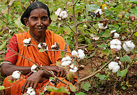 INDIA Odisha, village Badaraising, fairtrade cotton farmers of Agrocel near Rayagada, Dongria Kondh tribe, woman with nose ring / INDIEN Orissa Raygada, fairtrade Baumwollbauern von Agrocel,