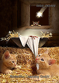 CHIARA,CHRISTMAS ANIMALS, WEIHNACHTEN TIERE, NAVIDAD ANIMALES, paintings+++++,USLGCHI493,#XA# ,funny ,funny