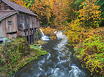 Clark County, WA<br /> Cedar Creek Grist Mill (1876) surrounded by autumn colored maple trees