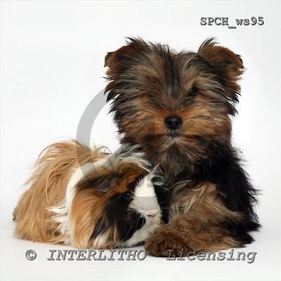 Xavier, ANIMALS, fondless, photos, SPCHWS95,#A#