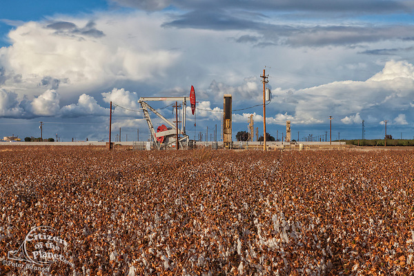 A pumpjack at oil well and fracking site situated in cotton field in Shafter. Kern County, located over the Monterey Shale, has seen a dramatic increase in oil drilling and hydraulic fracking in recent years.  San Joaquin Valley, California, USA