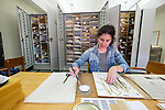 Graduate student Amber Horning prepares a plant specimen to be mounted and added to the Pullen Herbarium, which contains over 62,000 specimens. Photo by Robert Jordan/Ole Miss Communications