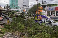 CURITIBA, PR, 05 DE DEZEMBRO 2013 – CLIMA TEMPO/ TEMPESTADE/CURITIBA -  Na tarde dessa quinta-feira(05), uma frente fria chega a capital Paranaense,com ventos atingindo 59km/h. Na Av. Batel, árvore cai em cima de automóveis e bloqueou parcialmente a via.(FOTO: PAULO LISBOA  / BRAZIL PHOTO PRESS)