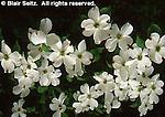 Hickory Run State Park, PA, dogwood flowers, Northeast PA Landscape,
