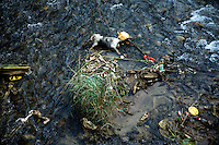 A dead pig carcass lies in a creek in Xinjie, Yunnan Province, China.