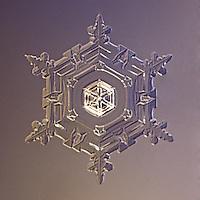 Snowflake Vega - Stellar Plate Snowflake