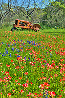 We capture several images of this old rusting tractor in a field of bluebonnets and indian paintbrush wildflowers.  We did this  as vertical.   We were lucky to captured it when we did a week later it was block off.