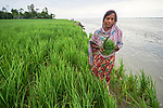 Jabeda Begum stands in her rice field in Kunderpara, a village on an island in the Brahmaputra River in northern Bangladesh. Severe flooding in August 2017 eroded the bank, washing away part of her farm.