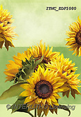 Marcello, FLOWERS, BLUMEN, FLORES, paintings+++++,ITMCEDF1080,#F#, EVERYDAY ,sunflowers