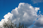 building cumulus clouds on a sunny blue sky day in montana