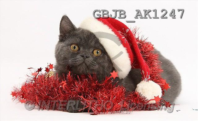 Kim, CHRISTMAS ANIMALS, photos(GBJBAK1247,#XA#) stickers