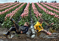"Alex Fritch, 7, and his sister Ana, 8, of Snohomish, Wash. empty the water from their boots after splashing in the puddles near the Pink Impression tulips at Tulip Town during the Skagit Valley Tulip Festival Tuesday, April 8, 2008. ""The flowers are incidental. The mud and the puddles are far more interesting,"" say their mother, who has brought the siblings there the past five years. The kids have come to enjoy playing in the puddles so much, that the family times its visits for after a rain, bringing multiple changes of clothes. This was change number two on the day. (Photo by Andy Rogers).."