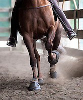 Tee Time, a Tennessee Walking Horse with pads on his hooves and chains around his ankles, warms up prior to being shown at the Northwest Walking Horse Classic in Spanaway, Wash. on July 11, 2015.. He is ridden by ridden by his owner Sue Williams, from McCleary, Wash., (© Karen Ducey Photography)
