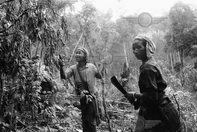 Kayah (Karenni) women making a little money by clearing away the undergrowth for a teak plantation, planned and financed by the Thai Ministry for Forests.