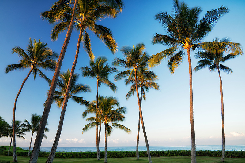 Palm trees and ocean.  Ko Olina, Oahu, Hawaii