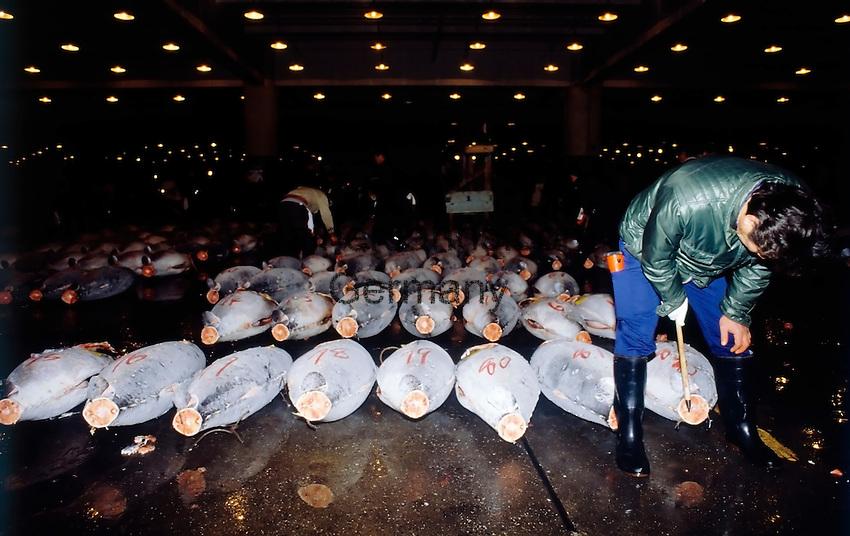 Japan, Tokyo: Tsukiji fish market, tuna auction
