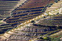 vineyards douro portugal