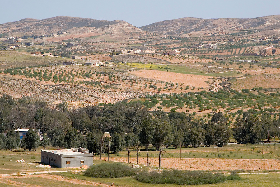 Sidi al-Gharib, near Tarhouna, Libya - Farms, Countryside, with Olive Trees in Distance