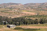 Sidi al-Gharib, near Tarhouna, Libya - Farms, Countryside, with Olive Trees in Distance