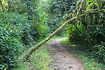 Bwindi Impenetrable National Park Trail