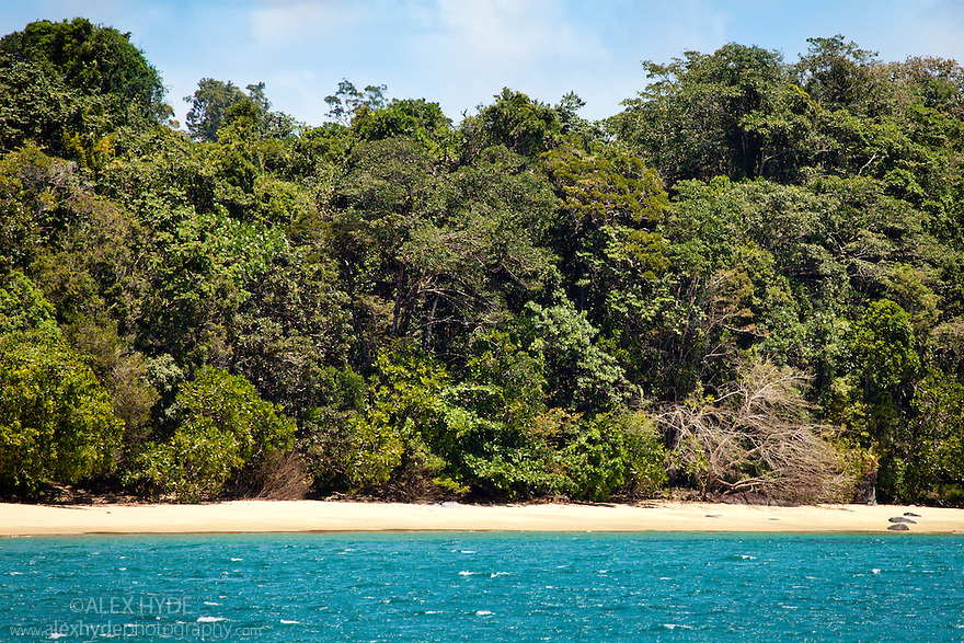 Coastal rainforest, Masoala Peninsula National Park, north east Madagascar.