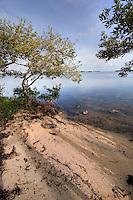 Secluded beach, Islamorada, Florida Keys