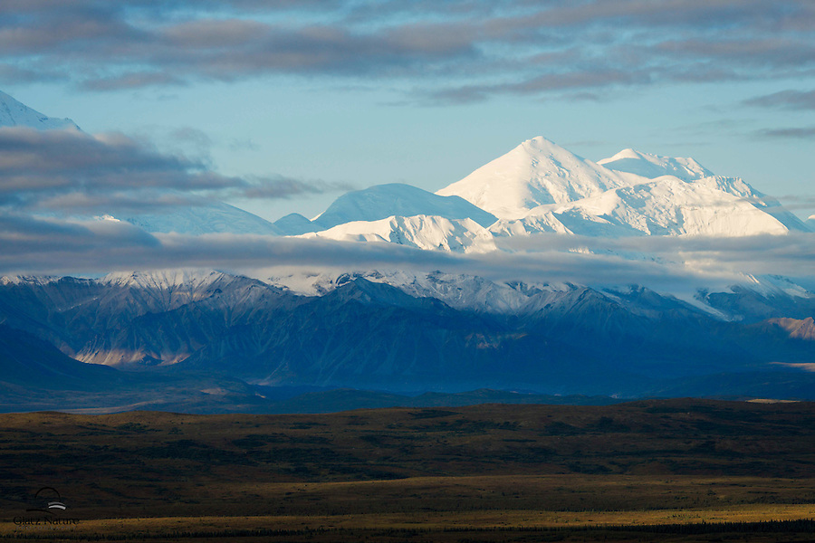 "Cloud cover, rain and cold seemed to dissolve as we drove to ""the mountain"" one morning. We got lucky and this is one of the first images taken when the Alaska Range began to show itself.  Denali National Park, Alaska."
