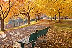 Fall foliage on the Charles River Esplanade, Boston, MA, USA