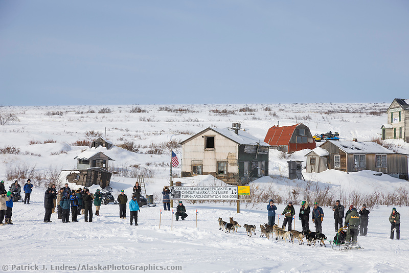 Musher Jeff King arrives in Candle in first place, the half way point of the 2008 All Alaska Sweepstakes sled dog race.
