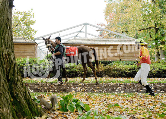 Wycked before The Delaware Park Arabian Juvenile Championship at Delaware Park on 10/27/12...